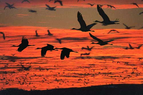 Archive news competitive birding featured at bernardo 39 s for Nm department of game and fish