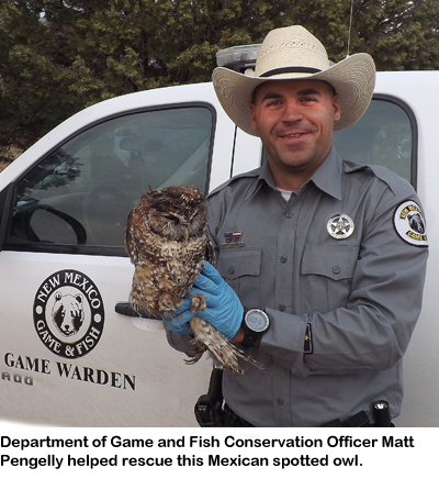 Archive news young boys help rescue rare mexican spotted owl for New mexico department of game and fish