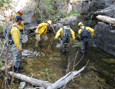 Archive news native rio grande cutthroat trout rescued for New mexico state fish