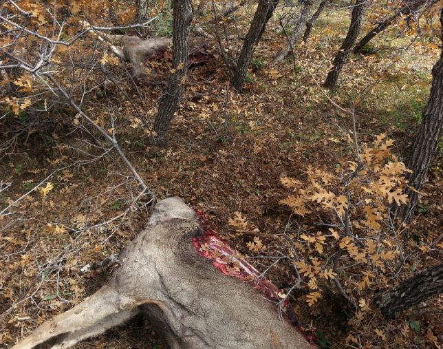 Poachers steal new mexico 39 s wildlife despite prevention for Nm game and fish license