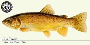 Gila Trout Cold Water Fish Illustration - New Mexico Game & Fish