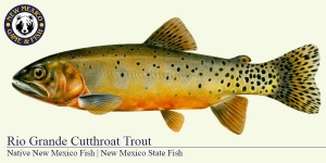 Rio Grande Cutthroat Trout Cold Water Fish Illustration - New Mexico Game & Fish