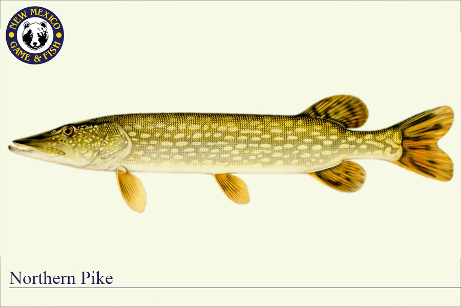 Warm water species new mexico department of game fish for How long is fish good for