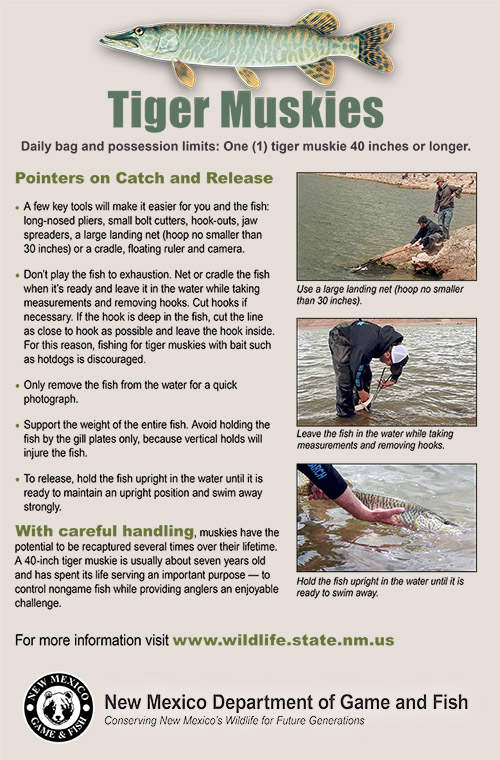 Tiger Muskies - Pointers on Catch and Release, 11x17 Poster (PDF)