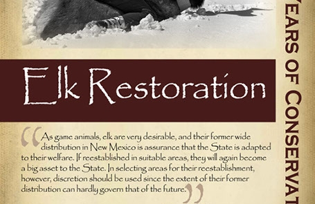 Elk restoration began 1911 and today is estimated at approximately 80,000 - New Mexico Game & Fish Century of Conservation