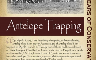 1930s, the first state to successfully capture and relocate antelope - New Mexico Game & Fish Century of Conservation