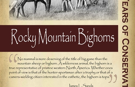 Starting in the 1940s restoring Rocky Mountain bighorn sheep to the state - New Mexico Game & Fish Century of Conservation