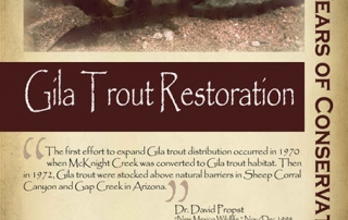 Gila trout began restoration of the 1960s -New Mexico Game & Fish Century of Conservation