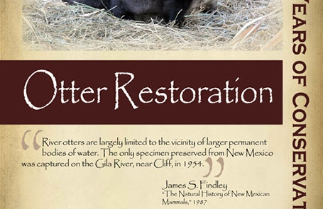 Restoring otters to the Rio Grande, 2000s- New Mexico Game & Fish Century of Conservation