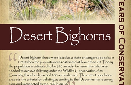 The successful recovery and delisting of desert bighorn sheep,  2010s - New Mexico Game & Fish Century of Conservation