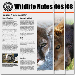 Wildlife Notes - Educational PDF presentations on various wildlife species - New Mexico Game & Fish
