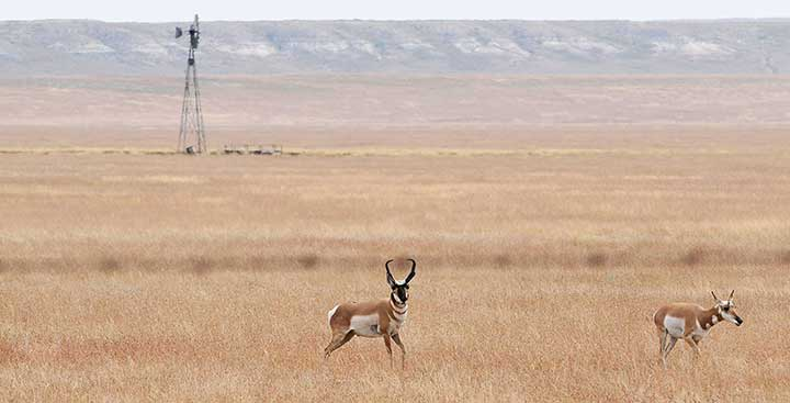Hunters can use pronghorn antelope authorization certificates to buy private-land pronghorn antelope licenses in New Mexico.