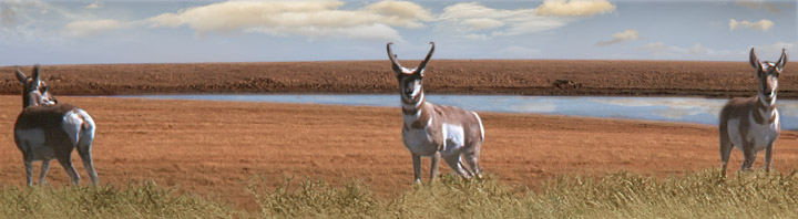 A-PLUS: Antelope Private Lands Use System (New Mexico Game and Fish) recognizes the contributions of landowners to pronghorn antelope management and offers sport hunting opportunities.