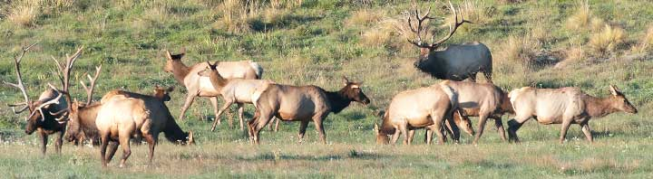 E-PLUS: Elk Private Lands Use System (New Mexico Game and Fish) recognizes the contribution of landowners to elk management and offers sport hunting opportunities.