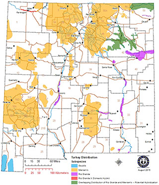 Distribution map of New Mexico sub-species of wild turkey: Merriam's, Rio Grande, and Gould's. (NM Department of Game and Fish)
