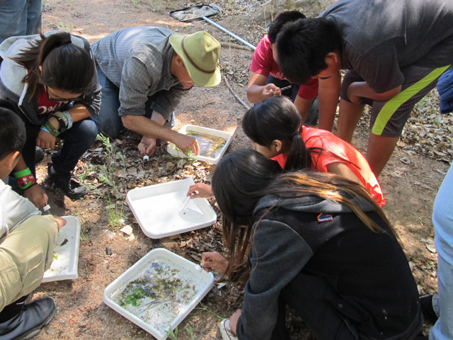 Cochiti Middle School students sorting macro-invertebrate samples. Share with Wildlife, New Mexico