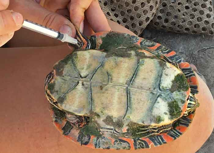 Share with Wildlife – Project Highlight: Chasing Turtles