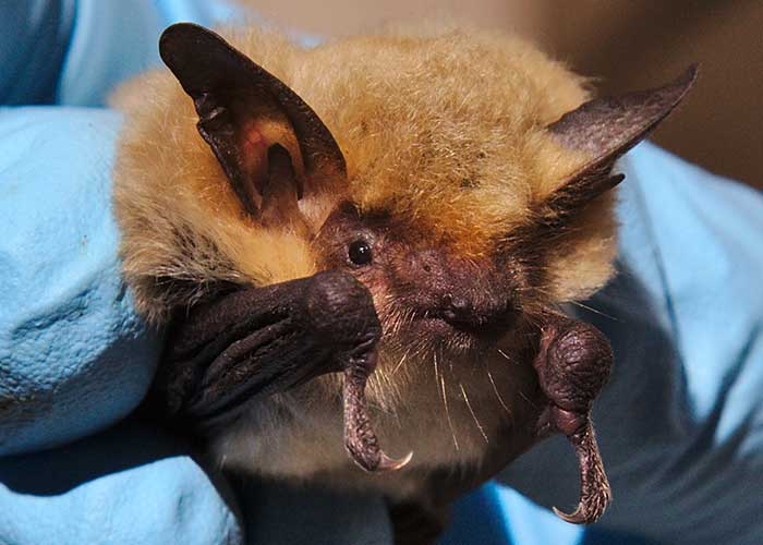 Share with Wildlife – Project Highlight: Getting Proactive about White-nose Syndrome