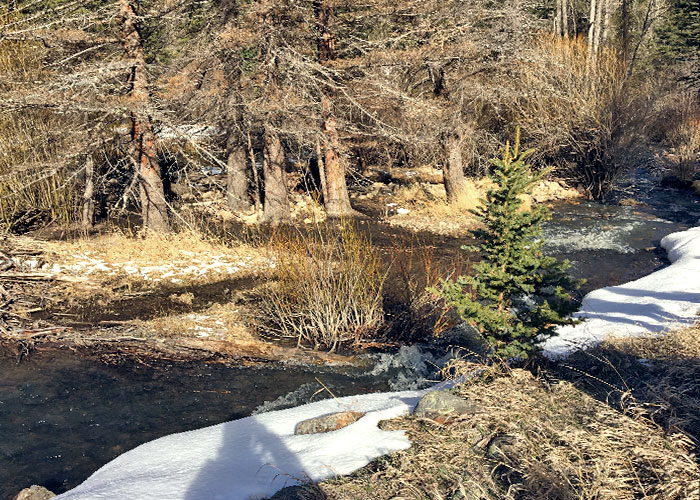 Share with Wildlife, New Mexico – Project Highlight: Reading Your Watershed