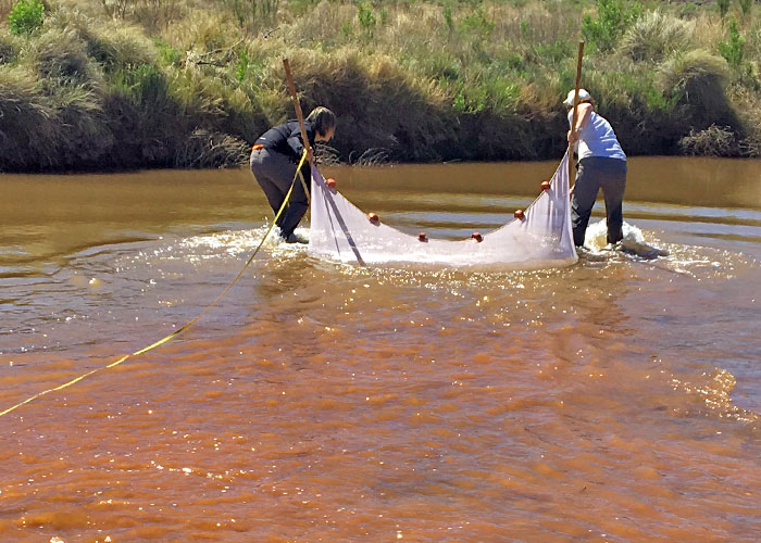 Share with Wildlife, New Mexico – Project Highlight: Tracking Elusive Fish