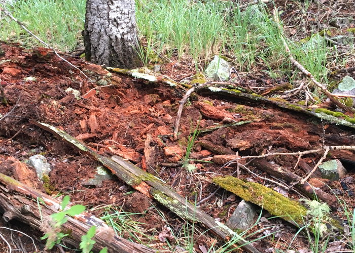 Share with Wildlife – Project Highlight: Tracking Divergence Between Salamander Populations
