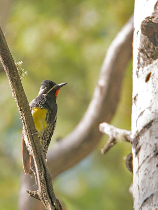 Share with Wildlife – Project Highlight: Surveying Birds in Remote Areas