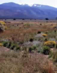 Urraca Wildlife Area in northern NM -  The Habitat Handbook helps developers minimize impacts  on wildlife habitats