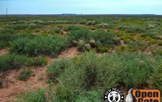 Open Gate Property 109 (Dove, Quail Hunting) Fort Sumner, New Mexico: Scrub-Woodland, Grassland, Wetland, and Riparian Habitat