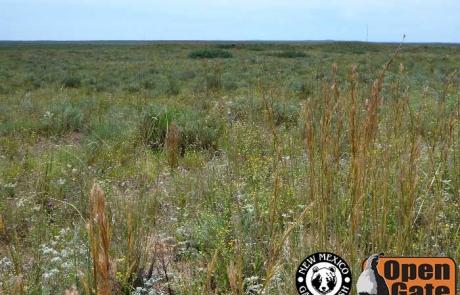 Open Gate Property 109 (Dove, Quail Hunting) Fort Sumner, New Mexico: Grassland, Scrub-Woodland, Wetland, and Riparian Habitat