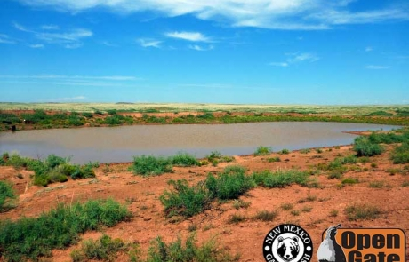 Open Gate Property 109 (Dove, Quail Hunting) Fort Sumner, New Mexico: Wetland, Grassland, Scrub-Woodland, and Riparian Habitat