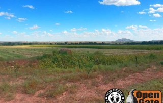 Open Gate Property 111 (Dove Hunting) Tucumcari, New Mexico: Grassland, Scrub-woodland, and Cropland