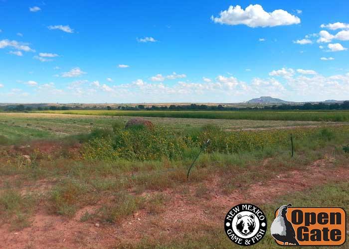 111 Tucumcari New Mexico Department Of Game Fish
