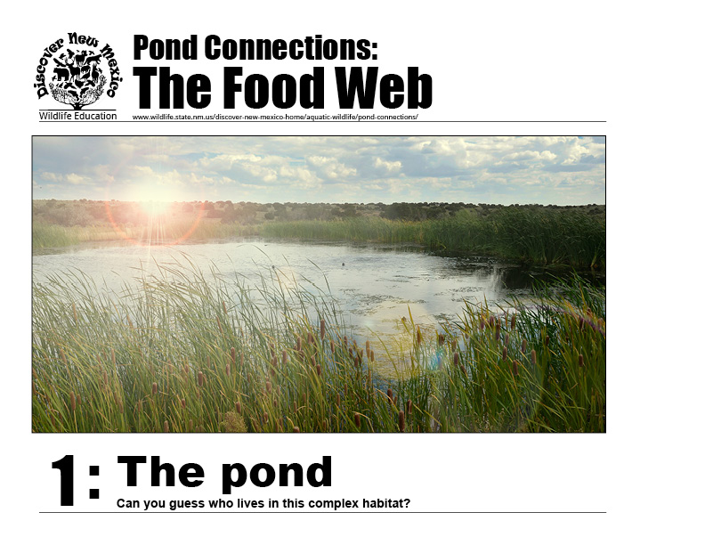 #1: The pond - can you guess who lives in this complex habitat?