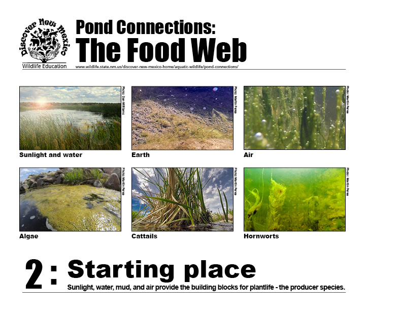#2: The food web starting place - sunlight, water, mud, air provide building blocks for plant life - the producer species.