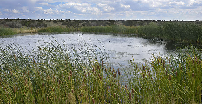 Pond connections new mexico department of game fish for Pond equipment near me