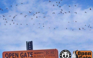 Cranes flying above sign at Open Gate Property 140 (Sandhill crane hunting) Casa Colorada, New Mexico
