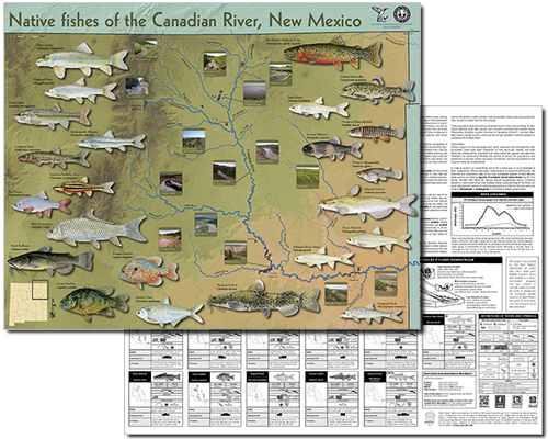 Native fishes of the Canadian River, New Mexico (click for NMDGF PDF poster).