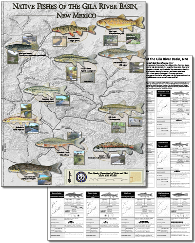 Native new mexico fish new mexico department of game fish for Nm fish stocking report