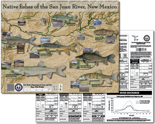Native new mexico fish new mexico department of game fish for New mexico department of game and fish