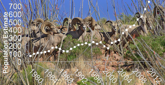 Desert Bighorn Sheep & Cougar Management Math - Discover New Mexico - Wildlife Conservation Curriculum