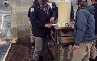 ANew Mexico Game and Fish biologist using the liquid nitrogen apparatus to freeze brand catfish.