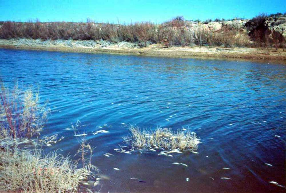 Fisheries management new mexico department of game fish for Pecos river fishing