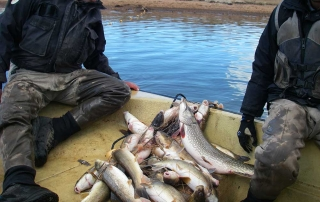 Population survey being conducted on Eagle Nest Lake - (New Mexico Game and Fish).