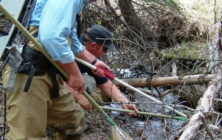 New Mexico Game and Fish biologists electrofishing a small mountain stream for Rio Grande cutthroat trout.
