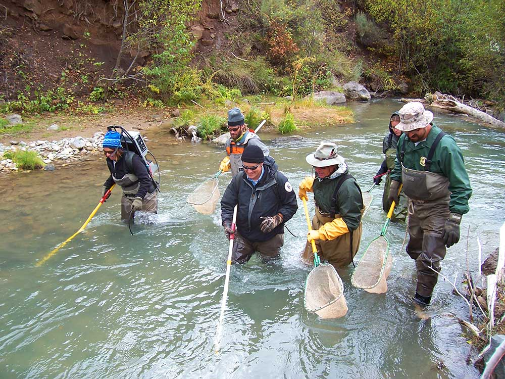 Fisheries management new mexico department of game fish for Gila river fishing