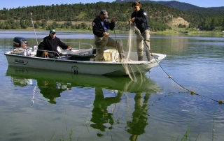 New Mexico Game and Fish biologists setting gill nets during a tiger muskie population survey.