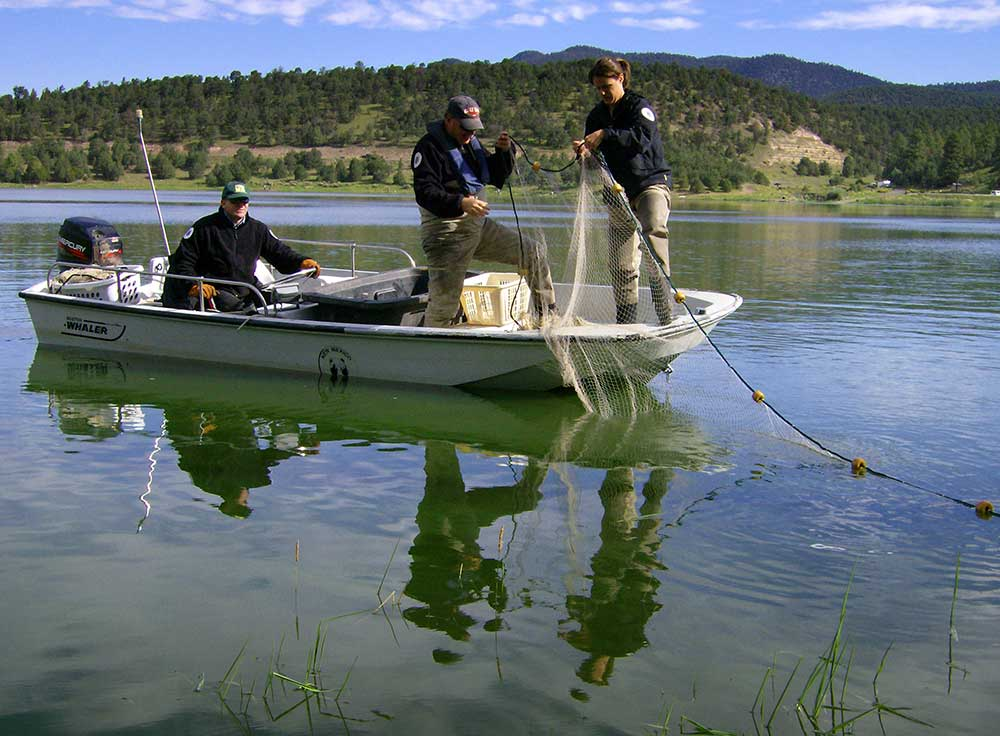 Fisheries management new mexico department of game fish for New mexico department of game and fish
