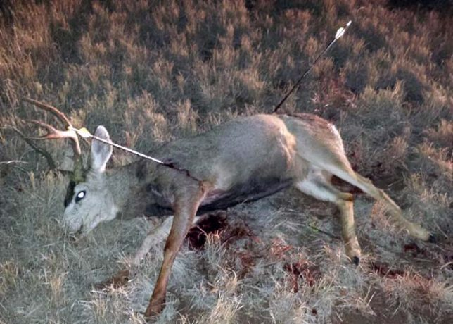 information sought for deer poached near conchas lake