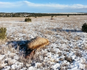 Game and Fish seek information on two cow elk illegally killed and left to rot.