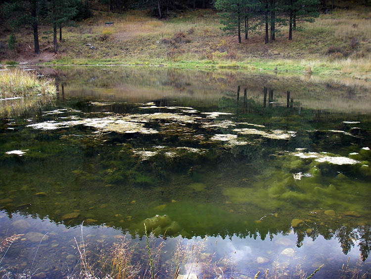 Aquatic vegetation infestation at Cowles Ponds.